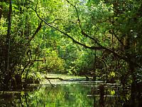 Everglades12395