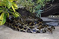 Python_molure