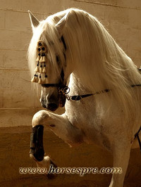 Andalusian_horses_4_2