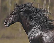 Blackhorsek