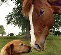 Horsegallerywithdog1040x940
